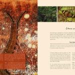 Lucca Cultura e Tecnologia - livro Parques e Reservas - pags-e